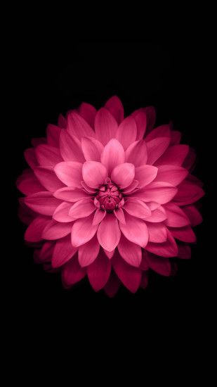 Pink Lotus Flower Android Wallpaper ...