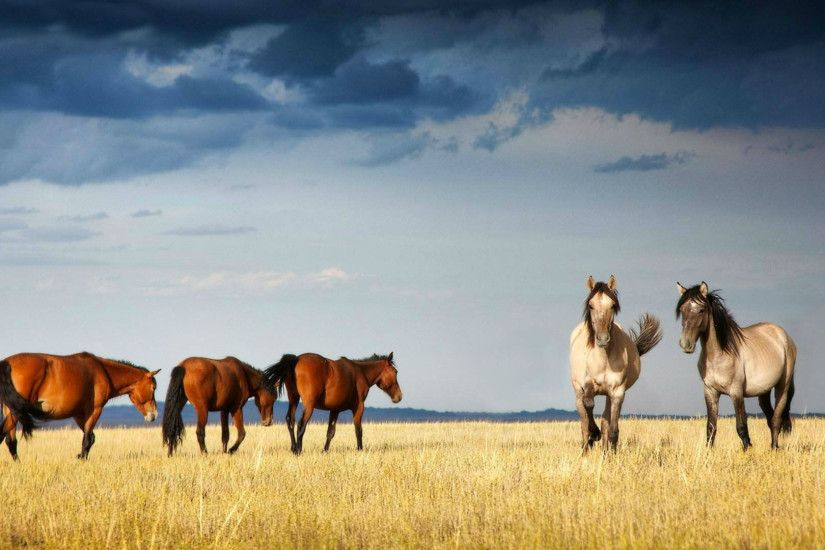 Horse Wallpaper – HD Picture – Horses Background