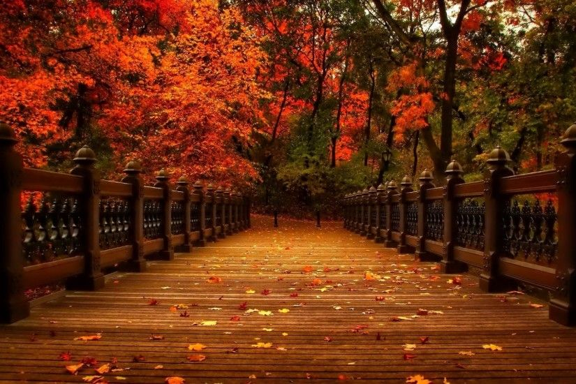 Walk Tag - Park Alley Nature Trees Walk View Leaves Autumn Wallpapers Of  For Laptop for