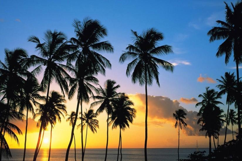 California Palm Trees Wallpaper Pictures 5 HD Wallpapers