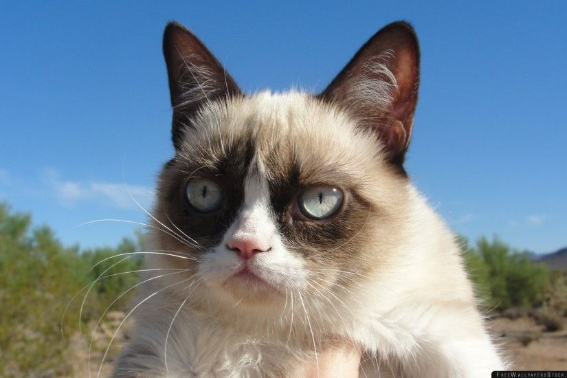 Download Free Wallpaper Grumpy Cat Dissatisfied