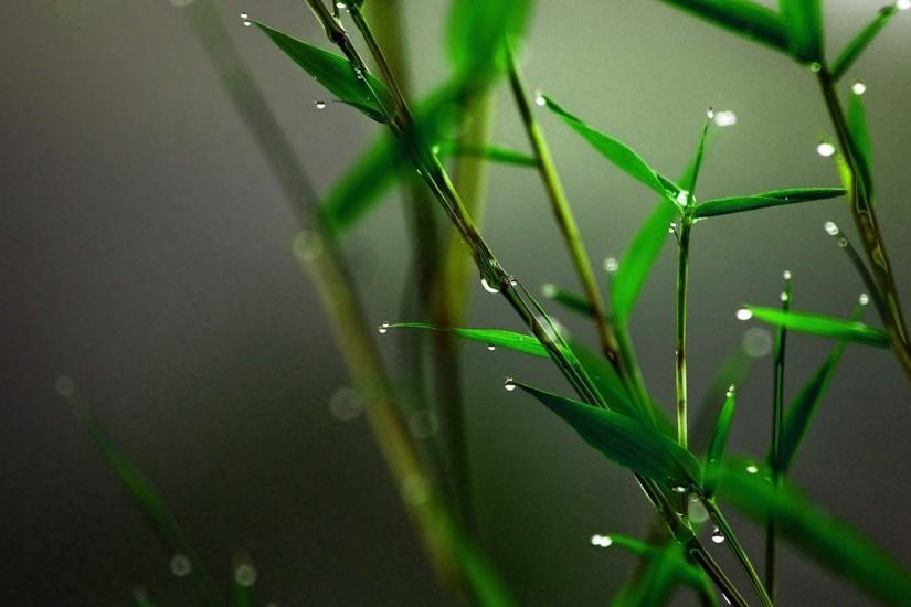 most popular bamboo wallpaper 1920x1080 for ipad
