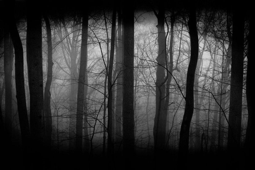dark woods background free download