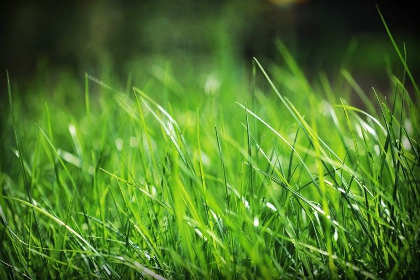 grass beautiful backgrounds desktop