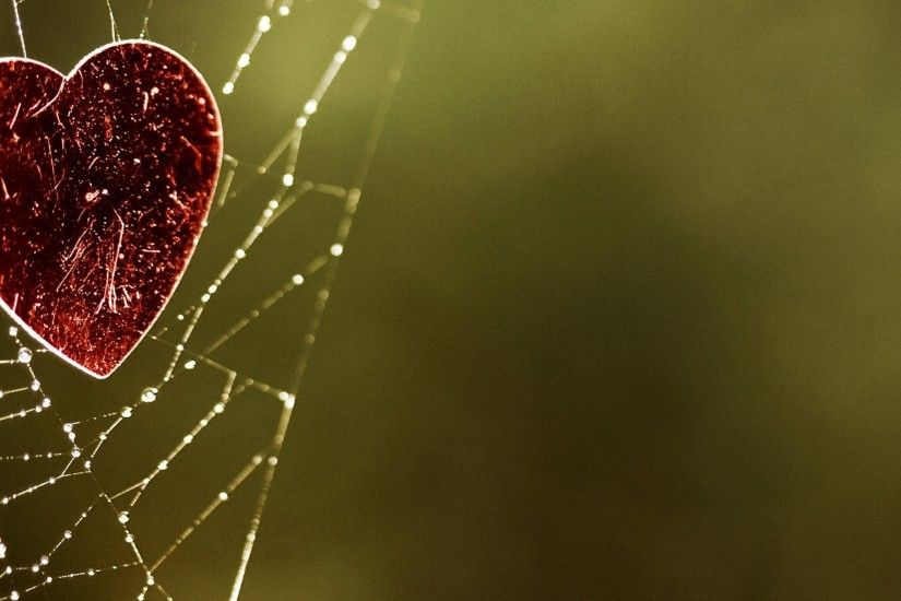 the heart of the spider web of love wallpaper Wallpaper