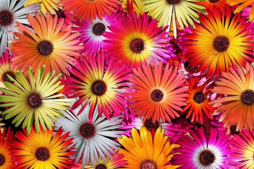 2560x1600 light color flowers