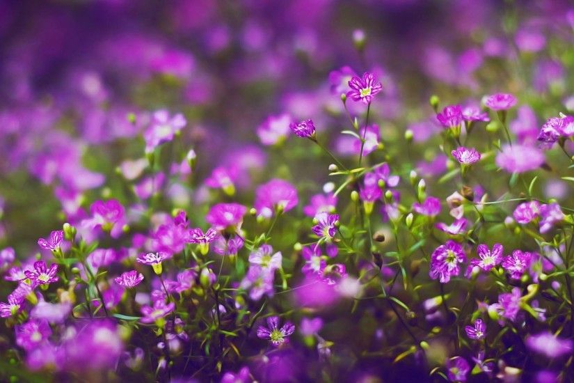 of 18 Beautiful Lavender Purple Flowers HD Wallpaper For Desktop