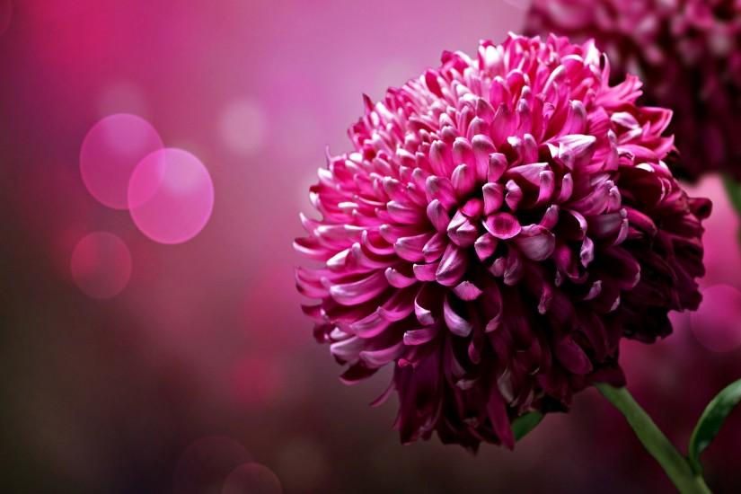 Beautiful Flower Wallpapers HD Resolution Free Download Wallpapers  Background 2560x1600 px 427.66 KB 3d & abstract