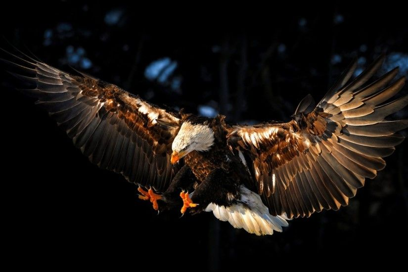 Eagle IPad HD Wallpapers / Wallpaper Eagle 5427 high quality .
