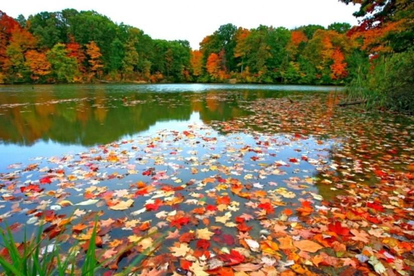Fall Foliage Backgrounds.