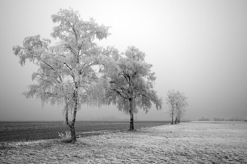 free black and white background 2560x1600 pictures