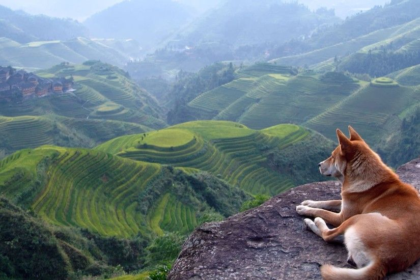 landscape, Dog, Terraces, Shiba Inu Wallpapers HD / Desktop and Mobile  Backgrounds