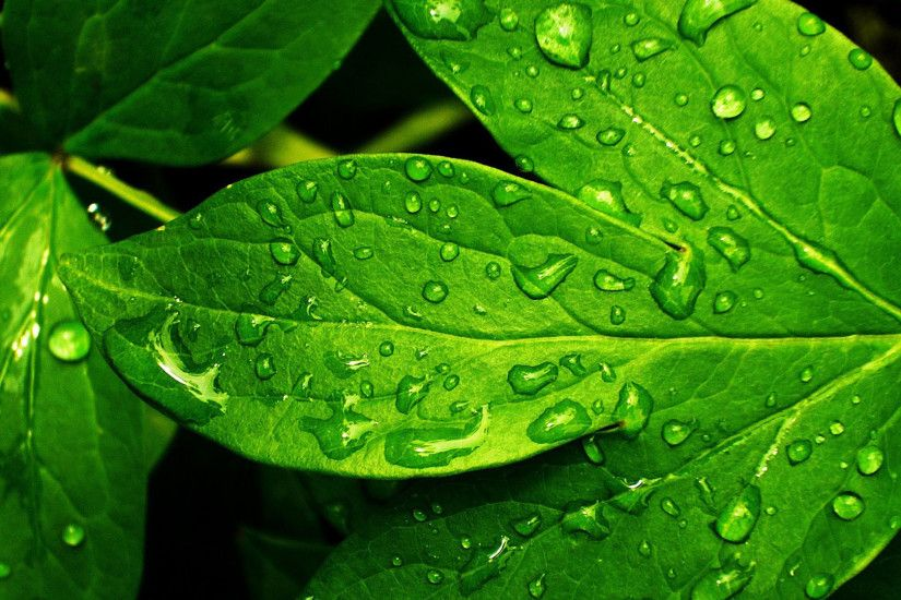 hd pics photos green leaves nature water drops desktop background wallpaper  5