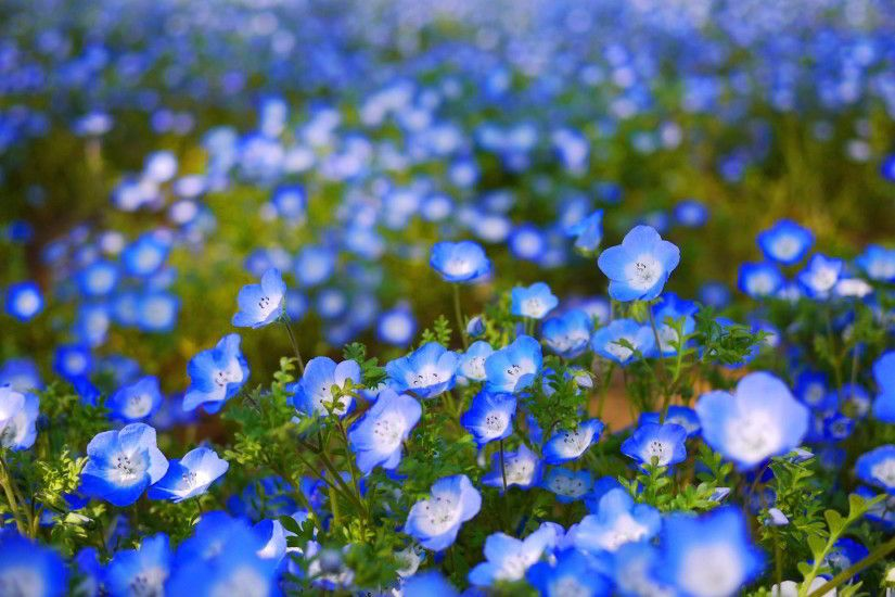 Special Blue Flower Wallpaper | Full HD Pictures