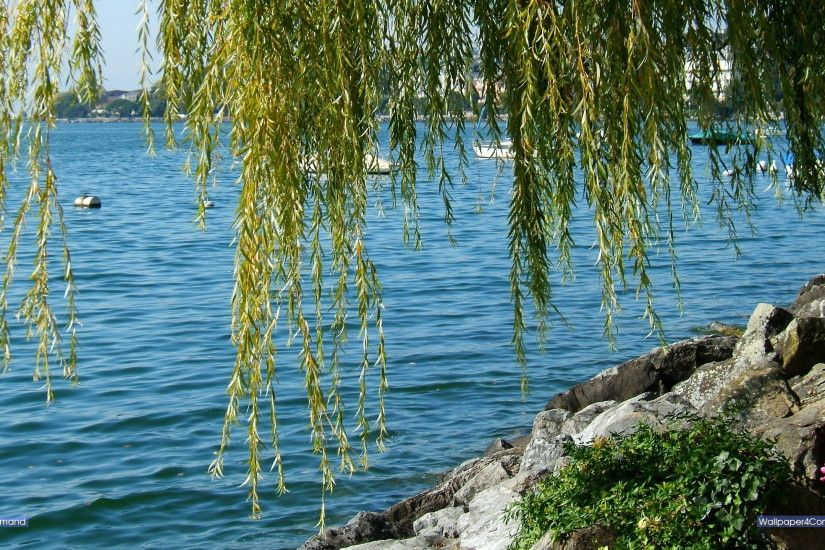 Lake of Geneva at Montreux, Switzerland, a weeping willow at the shore of  the lake.