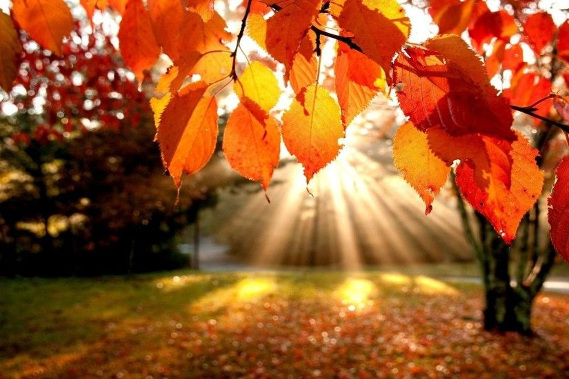 natural hd autumn background