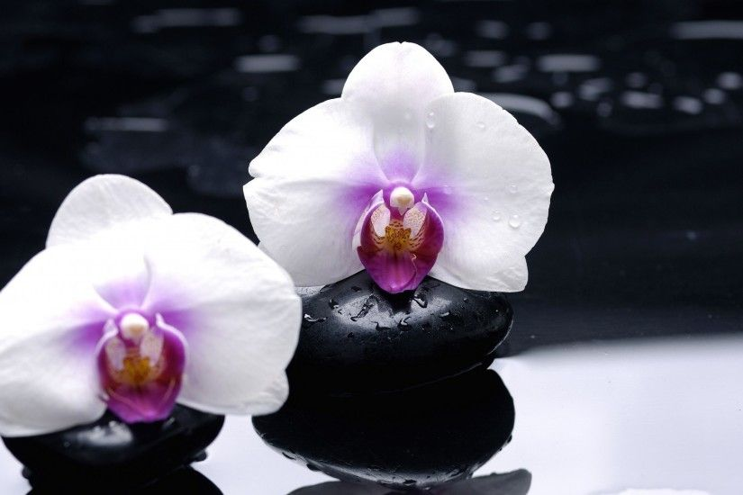 Earth - Orchid Wallpaper