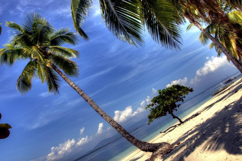 Beach palm tree Wallpapers Pictures Photos Images. Â«