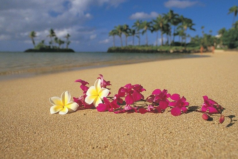 Hawaii Palm Trees Oahu Pink Flowers Plumeria Wallpaper Background