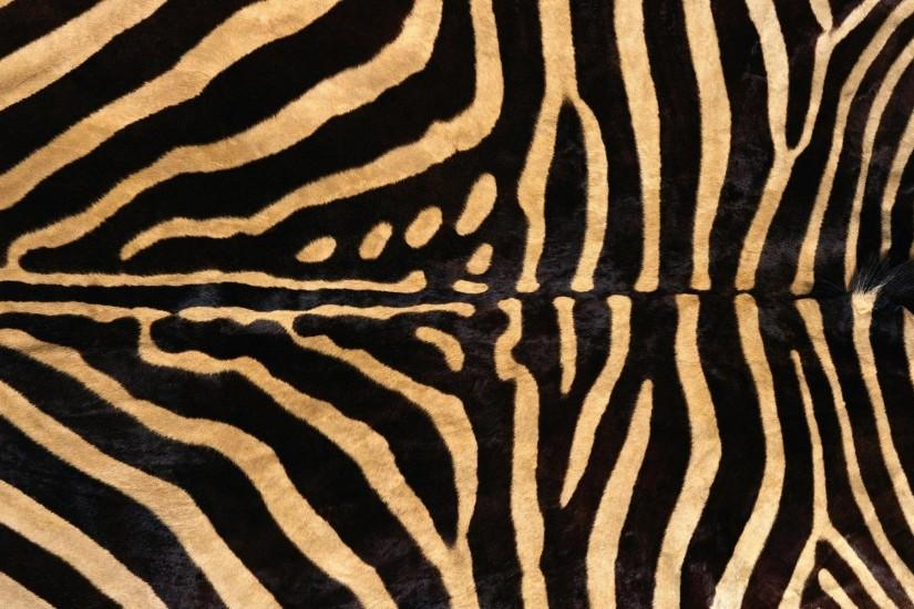 Zebra Wallpapers Android Apps on Google Play 1024×768 Zebra Images  Wallpapers (45 Wallpapers