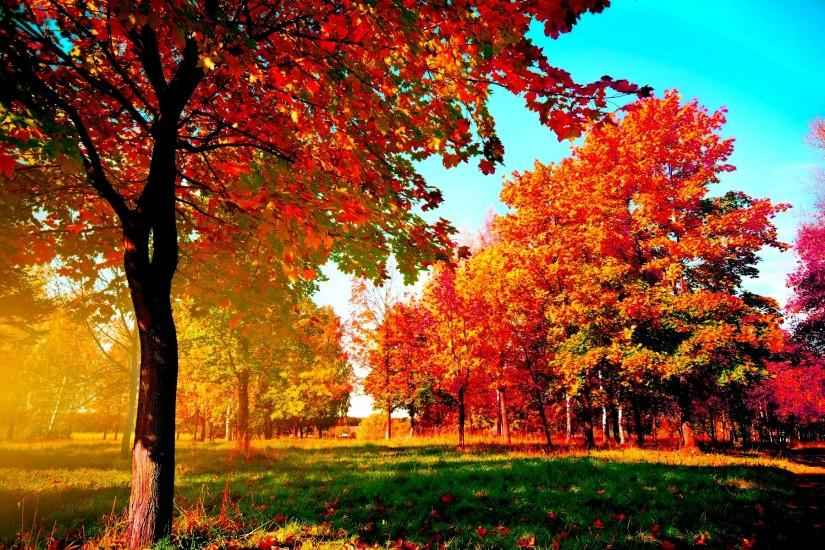 widescreen fall wallpaper 1920x1200 hd for mobile