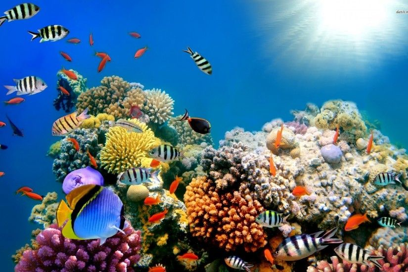 wallpaper beautiful fish background gallery 1920x1200
