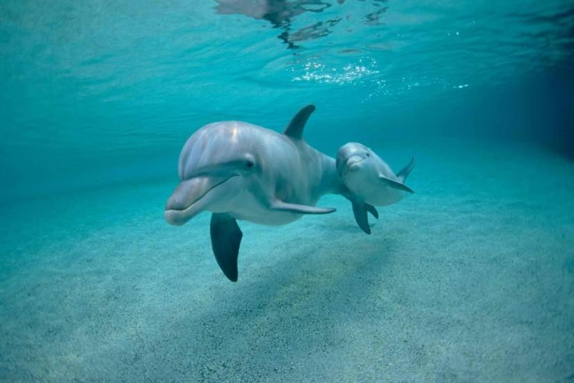 Cute Baby Dolphins Jumping - Cutes Baby