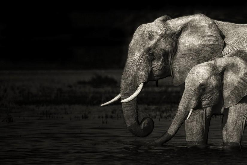 popular elephant wallpaper 1920x1200 for mobile hd