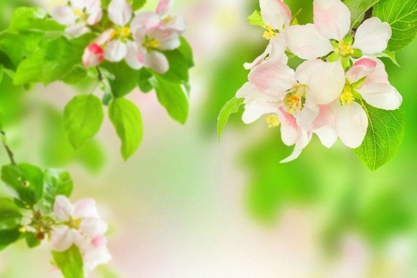 Spring apple blossom Wallpapers | Pictures