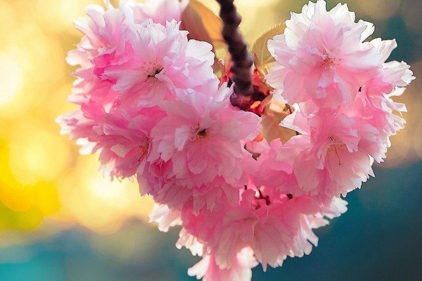 Flowers Spring Nature Love Heart Bloom Android Hd Wallpapers Free Download.