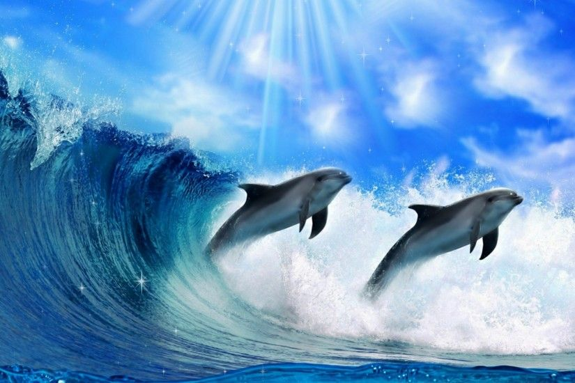 dolphin hd widescreen wallpapers backgrounds