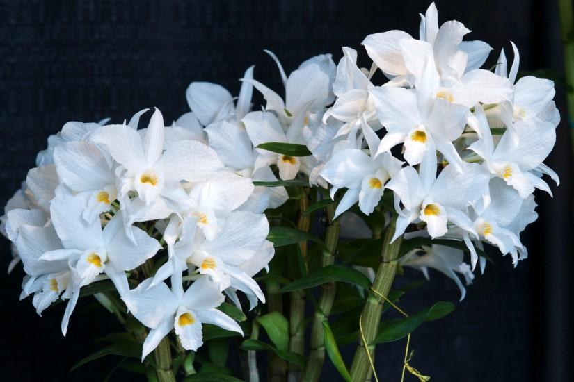 3200x2100 Wallpaper orchid, flower, white, background, stems