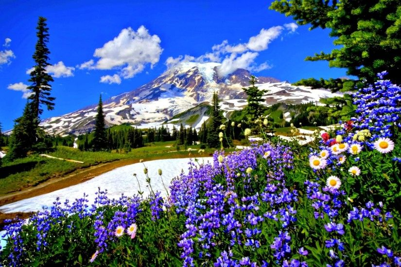 Landscape Nature Spring Flowers And Mountains Rocky Mountain Peaks .