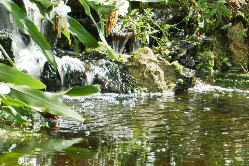 Pond with Small Waterfall, Lily Pads and Vegetation , 4K Stock Video  Footage - VideoBlocks
