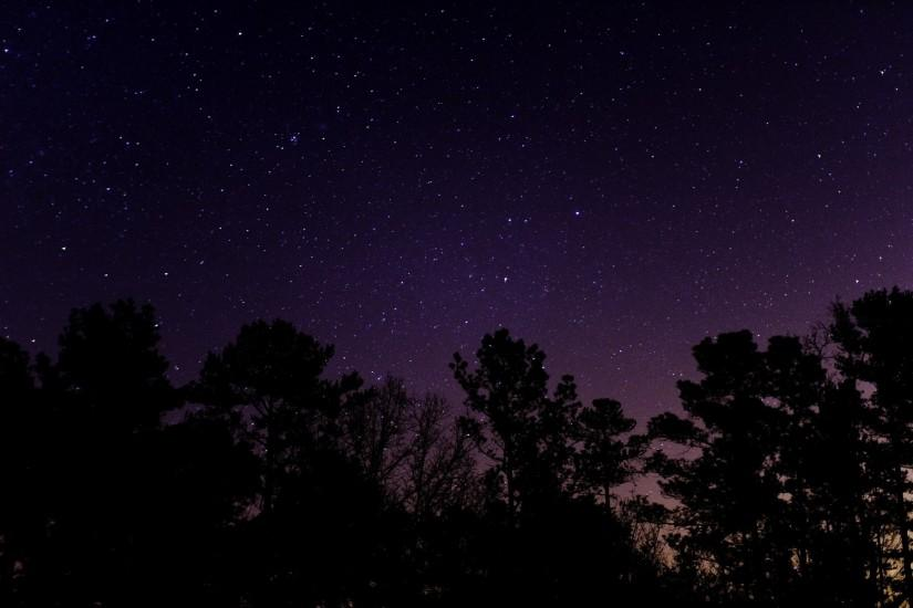 Trees under the starry sky wallpaper - 1034410