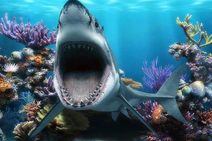 Shark Wallpaper HD Pixels Talk