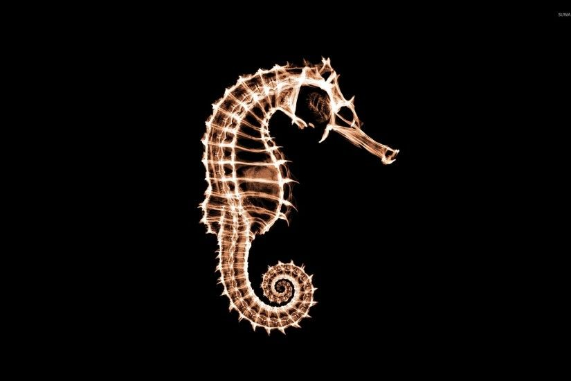 X-ray of a seahorse wallpaper