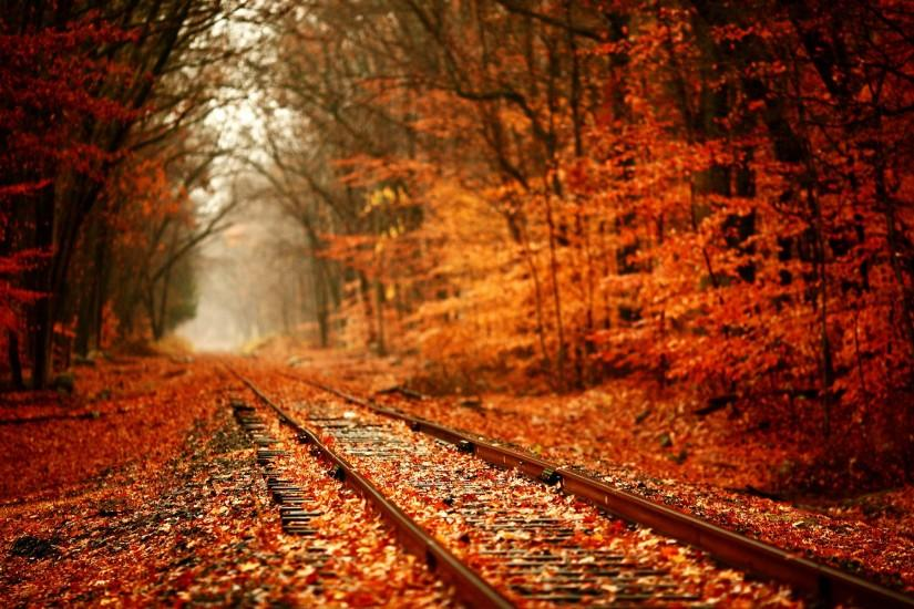 Tracks train railroad autumn fall seasons leaves colors trees forest  wallpaper | 1920x1200 | 24348 | WallpaperUP