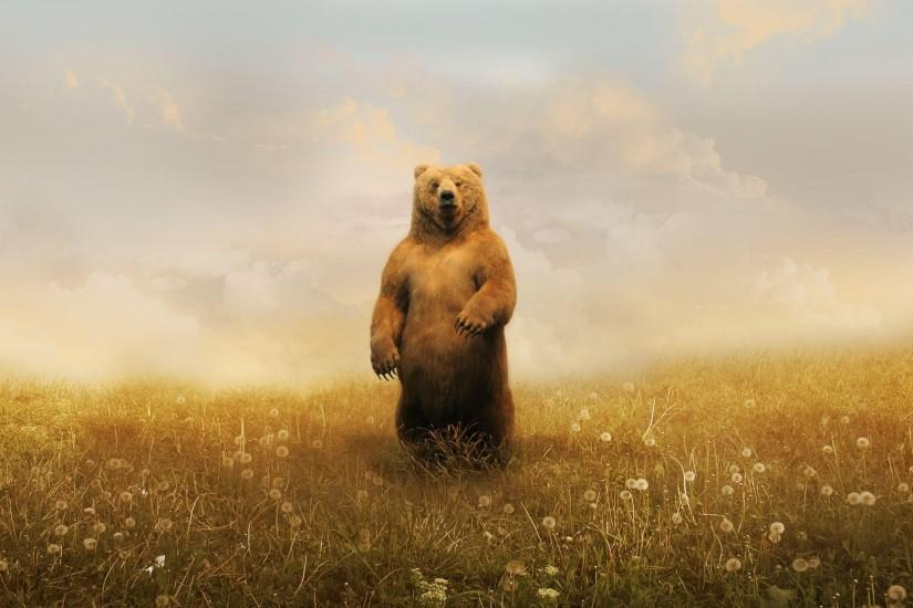 bear wallpaper 2560x1600 for windows 7