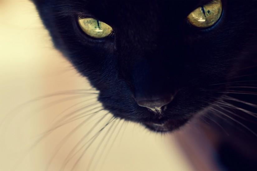 Black cat face Wallpapers Pictures Photos Images. Â«
