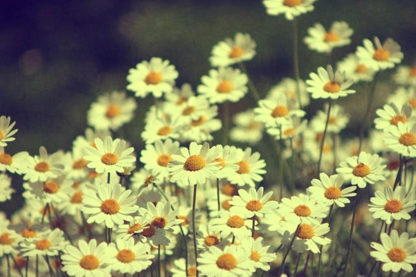 Vintage Flowers HD Backgrounds.