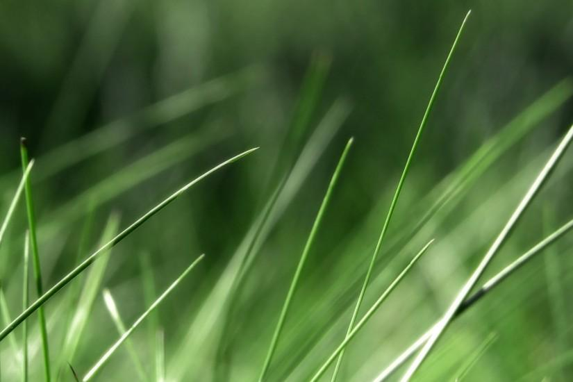 most popular grass wallpaper 1920x1200 for pc