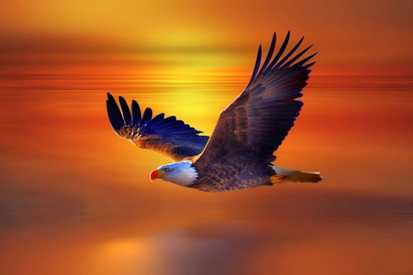 latest hd eagle flying wallpaper