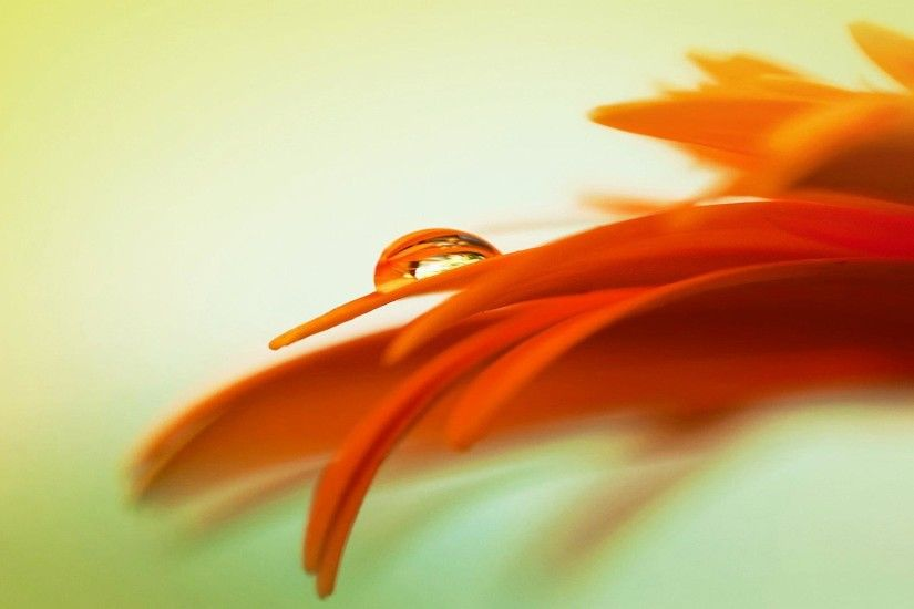 wallpaper.wiki-Free-cool-orange-flowers-wallpaper-PIC-