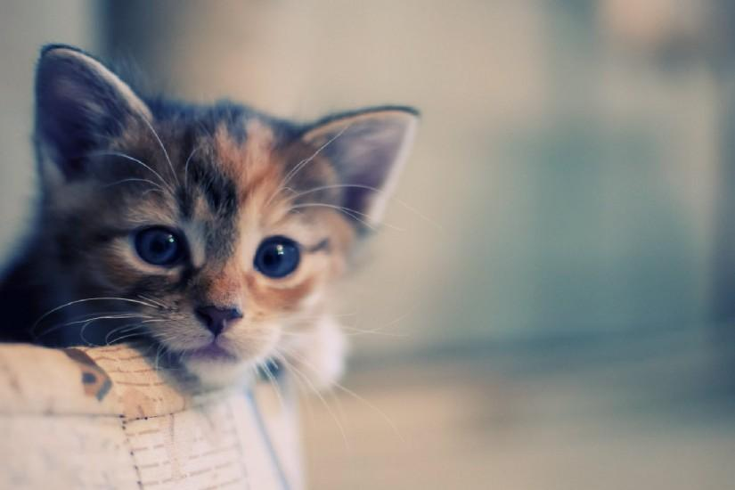 ... Cute Cat Wallpapers HD Resolution Hd Cartoon Tumblr Iphone Dinding .