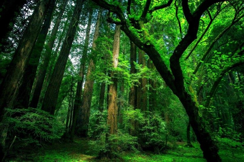 top hd green forest