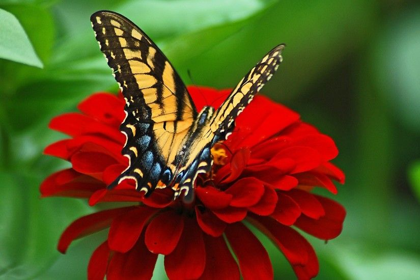 Beautiful butterfly on red flower
