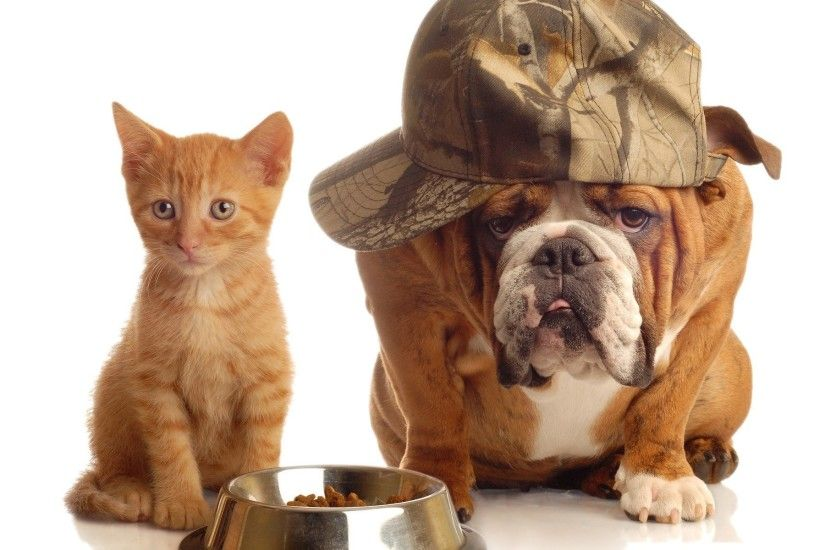 Cats animals dogs bulldog english bulldog wallpaper | 1920x1200 | 360569 |  WallpaperUP