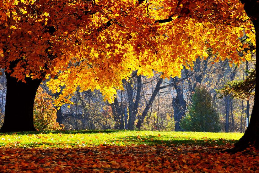Wonderful Autumn HD Wallpapers