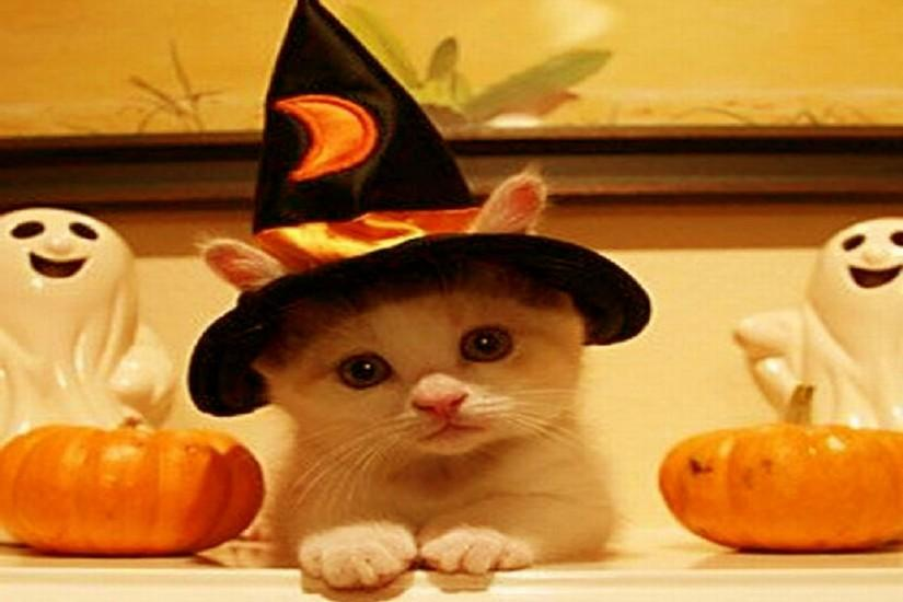 cool cute halloween wallpaper 2560x1920 photos